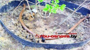Капельное орошение растений в Гомеле